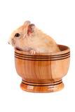 Petit hamster drôle dans une cuvette en bois d'isolement sur le fond blanc Image stock