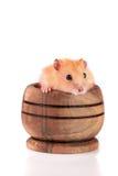 Petit hamster drôle dans une cuvette en bois d'isolement sur le fond blanc Photos stock