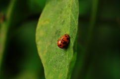 Petit insecte dans les affaires Photographie stock