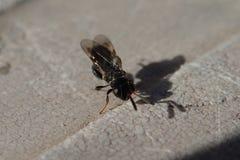 Petit insecte noir Photo libre de droits
