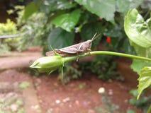 Petit insecte photos libres de droits