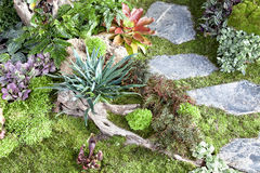 Petit jardin Image libre de droits