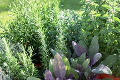 Petit jardin d'herbes aromatiques Images libres de droits