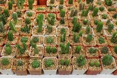 Petit jardin de boutique de ferme de cactus sur le marché, cactus d'élevage Photos libres de droits
