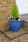 Petit jardin mis en pot Image libre de droits