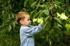 Petit jardinier 2 Photographie stock libre de droits