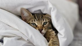 Petit jeune chat Photo libre de droits