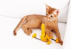 Petit jouer mignon de chat Image libre de droits