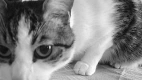 Petit Kitty Images libres de droits