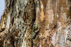 Petit lézard vert sur le tronc d'arbre Image stock