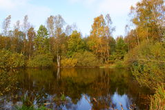 Petit lac. Images libres de droits
