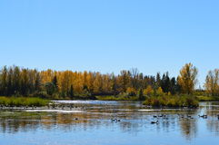 Petit lac image libre de droits