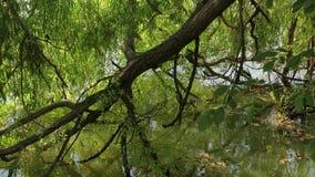 Petit lac avec des arbres banque de vidéos