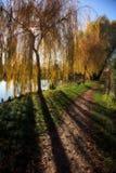 Petit lac avec des arbres en automne image stock