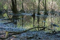 Petit lac dans la forêt Photo stock