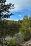 Petit lac de forêt image stock