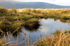 Petit lac en montagnes Images libres de droits