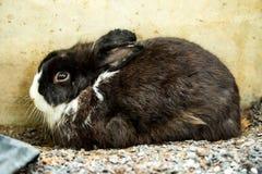 Petit lapin Photographie stock libre de droits