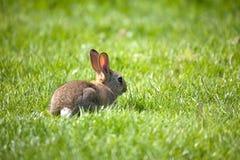 Petit lapin Photos stock