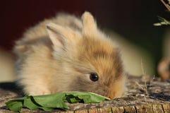 Petit lapin Photographie stock