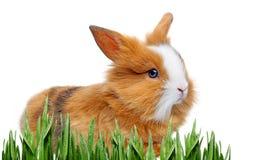 Petit lapin Photos libres de droits