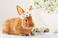 Petit lapin avec des fleurs de ressort Images libres de droits