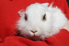 Petit lapin blanc Photographie stock