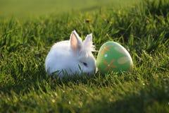 Petit lapin blanc sur l'herbe verte Photographie stock libre de droits