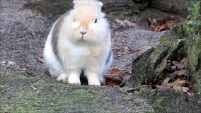 Petit lapin, bonbon, Pâques banque de vidéos