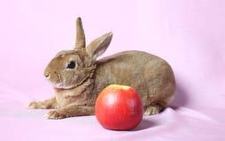 Petit lapin décoratif Photographie stock libre de droits