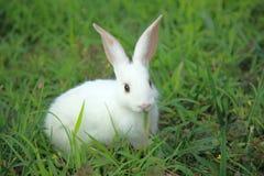 Petit lapin de lapin avec du charme Photos libres de droits