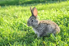 Petit lapin drôle fonctionnant sur le champ photos libres de droits