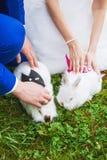Petit lapin drôle fonctionnant sur le champ en été Photo libre de droits