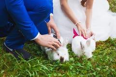 Petit lapin drôle fonctionnant sur le champ en été Photos libres de droits