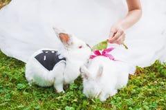 Petit lapin drôle fonctionnant sur le champ en été Photographie stock libre de droits