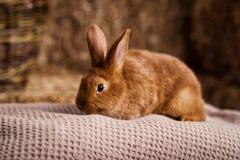 Petit lapin drôle parmi les oeufs de pâques dans l'herbe de velours, WI de lapins Images libres de droits