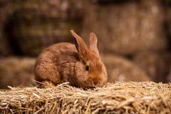 Petit lapin drôle parmi les oeufs de pâques dans l'herbe de velours, WI de lapins Photos stock