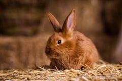 Petit lapin drôle parmi les oeufs de pâques dans l'herbe de velours, WI de lapins Images stock