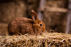 Petit lapin drôle parmi les oeufs de pâques dans l'herbe de velours, WI de lapins Image stock