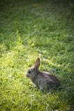 Petit lapin en soleil avec le grand fond herbeux Photographie stock