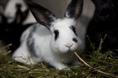 Petit lapin mignon dans la cage Photos stock