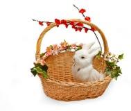 Petit lapin mignon dans le panier Image stock