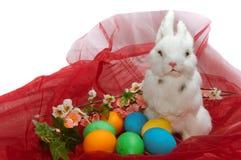 Petit lapin mignon dans le panier Photographie stock