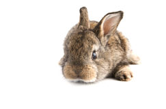 Petit lapin mignon de bébé sur le fond blanc, Photo stock