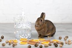 Petit lapin mignon se reposant près de la cage à oiseaux photo stock