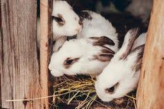Petit lapin repéré Photographie stock libre de droits