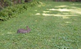 Petit lapin se reposant sur une herbe verte Photo stock