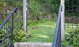 Petit lapin se reposant sur une herbe verte Images stock