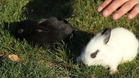 Petit lapin sur l'herbe verte banque de vidéos