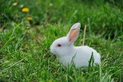 Petit lapin sur le champ Image libre de droits